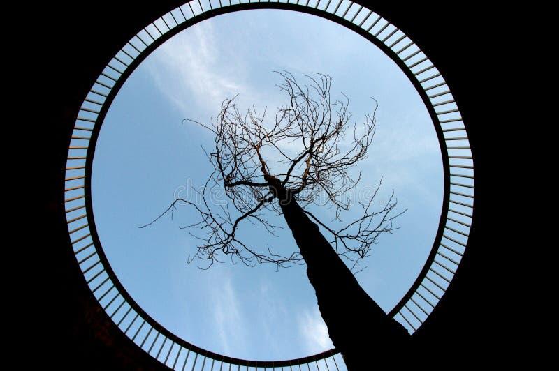 Árbol que apunta hacia el cielo fotografía de archivo libre de regalías