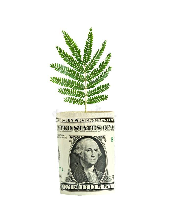 Árbol que crece de cuenta de dólar imagen de archivo libre de regalías