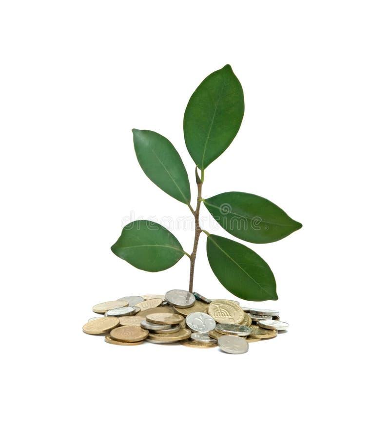 Árbol que crece de la pila de monedas imagen de archivo libre de regalías