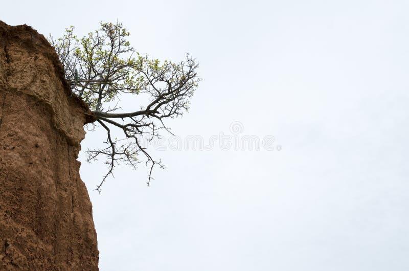 Árbol que crece en la esquina de la formación en el desierto - aga del suelo imágenes de archivo libres de regalías