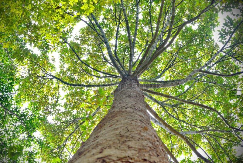 Árbol que mira para arriba la visión foto de archivo libre de regalías