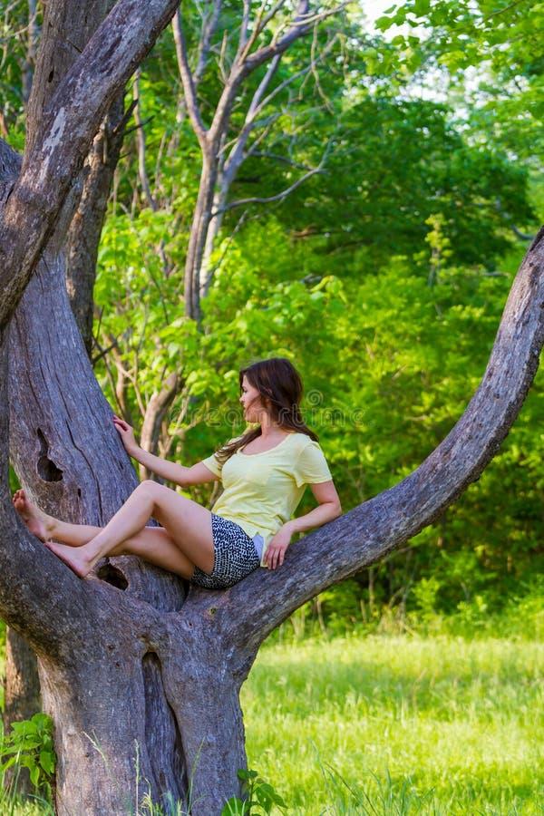 Árbol que sube de la chica joven bonita foto de archivo libre de regalías
