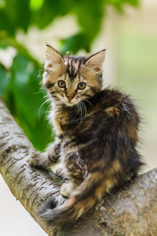 Árbol que sube del gato curioso lindo del gatito listo para saltar imagen de archivo libre de regalías