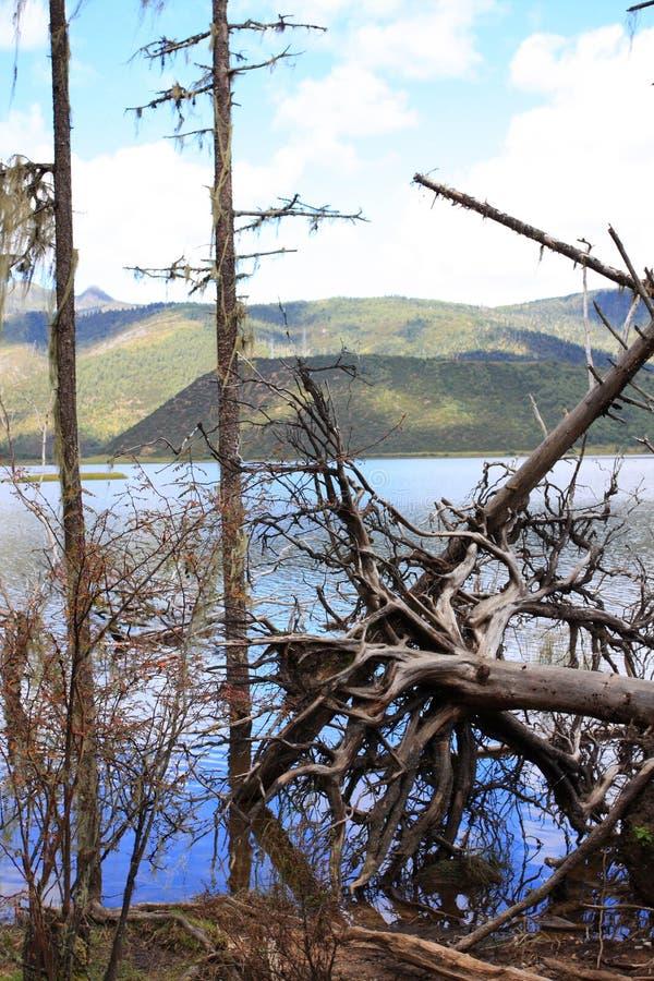 Árbol quebrado en bosque fotos de archivo libres de regalías