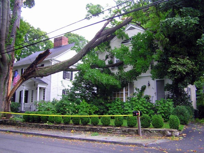 Árbol quebrado en la casa - daño del huracán fotografía de archivo