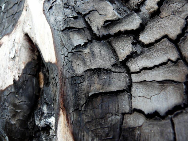 Árbol quemado imagen de archivo libre de regalías