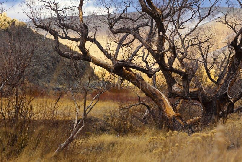 Árbol quemado en humedales foto de archivo