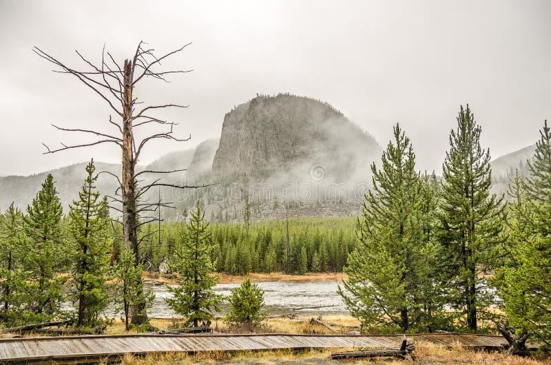 Árbol rígido, desnudo en Yellowstone imágenes de archivo libres de regalías