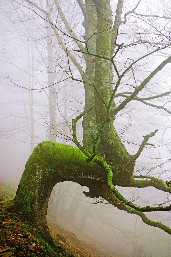 Árbol raro en la niebla fotografía de archivo libre de regalías