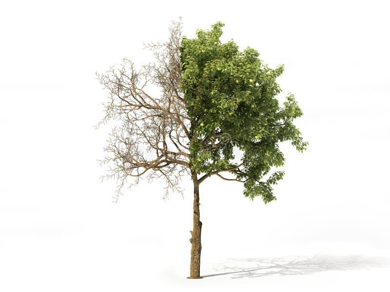 Árbol realista aislado en un blanco ilustración 3D stock de ilustración