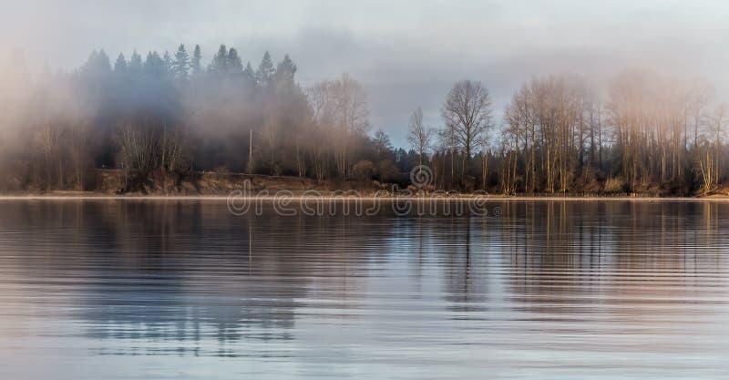 Bosque brumoso a través del río foto de archivo