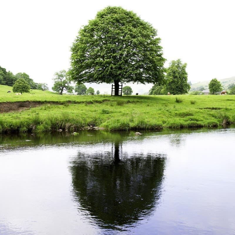 Árbol reflejado en el río Hodder fotografía de archivo libre de regalías