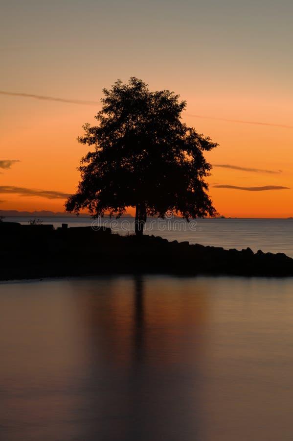 Árbol reflejado en la puesta del sol fotos de archivo