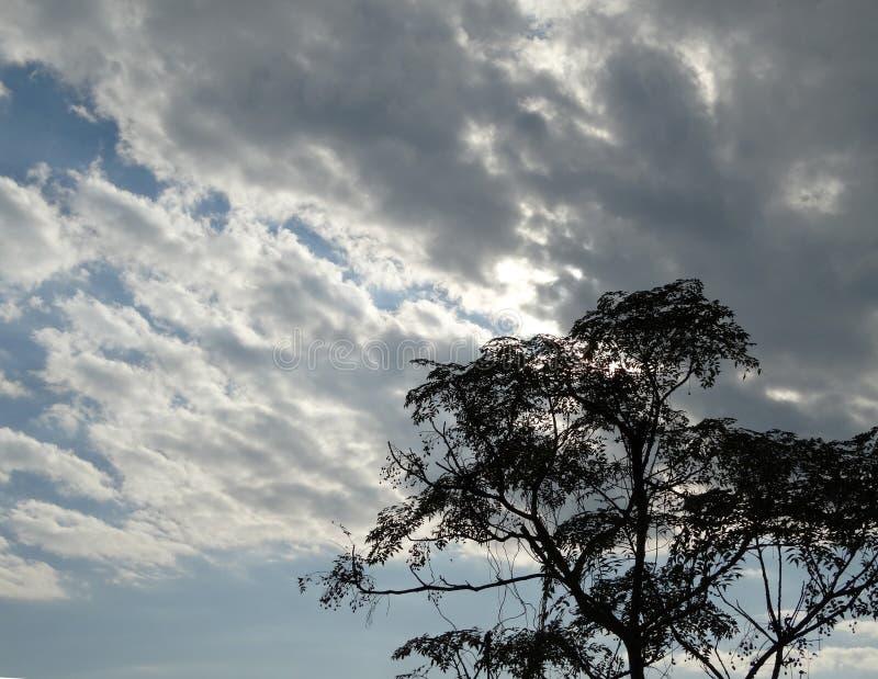 Árbol salvaje que se coloca alto en cielo dramático fotografía de archivo libre de regalías
