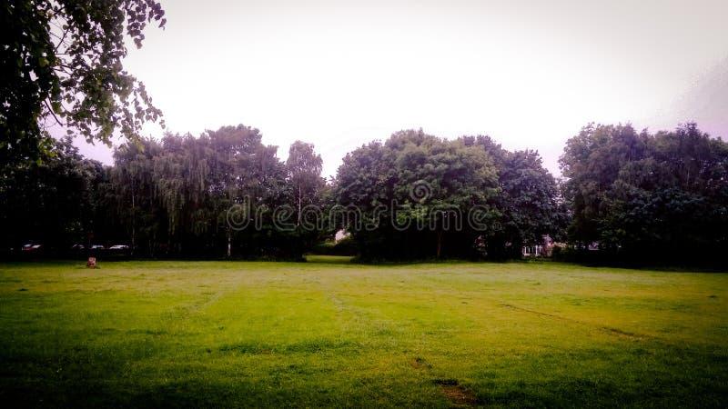 Árbol Scenescape imagenes de archivo