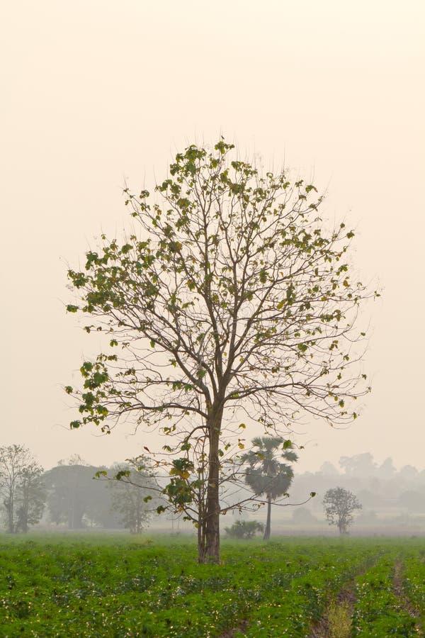 Árbol secado imagen de archivo