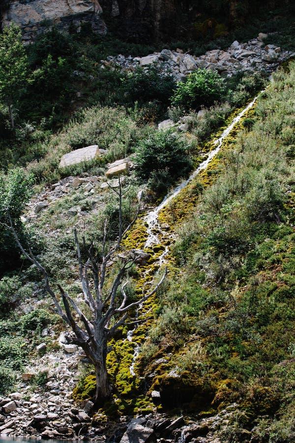 Árbol secado en una montaña cubierta con el musgo Barranco de Sulak, Daguest?n fotografía de archivo libre de regalías