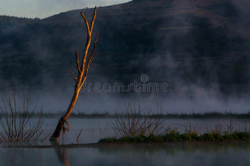 Árbol secado solo en la niebla fotografía de archivo libre de regalías