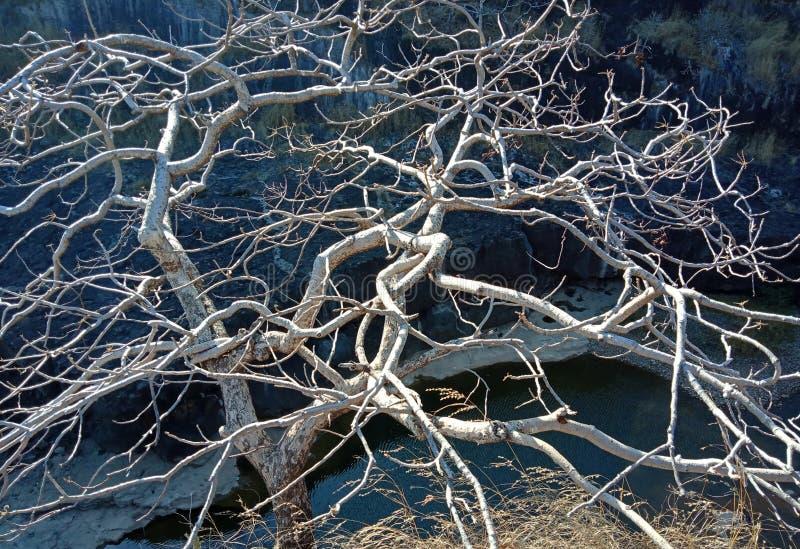árbol seco con la estructura de madera y el río lakhnadon la India febrero de 2018 llevado imagen, paisaje fotografía de archivo libre de regalías