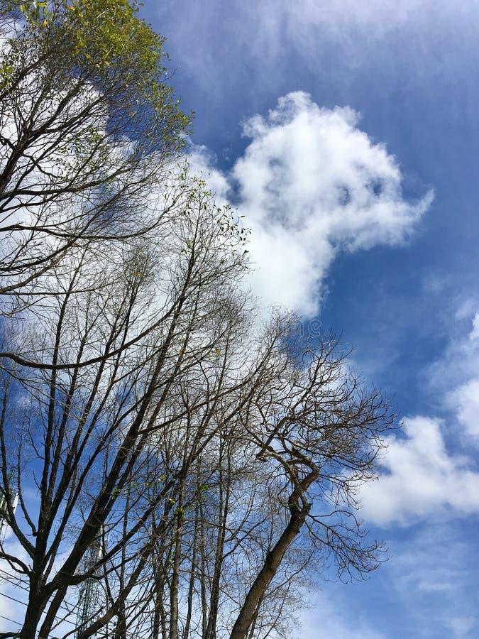 Árbol seco en fondo del cielo nublado imagen de archivo libre de regalías