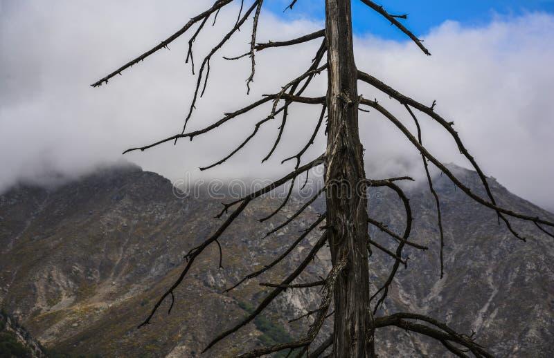 Árbol seco en montaña imagen de archivo libre de regalías