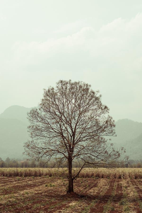 Árbol seco solo en campo foto de archivo libre de regalías