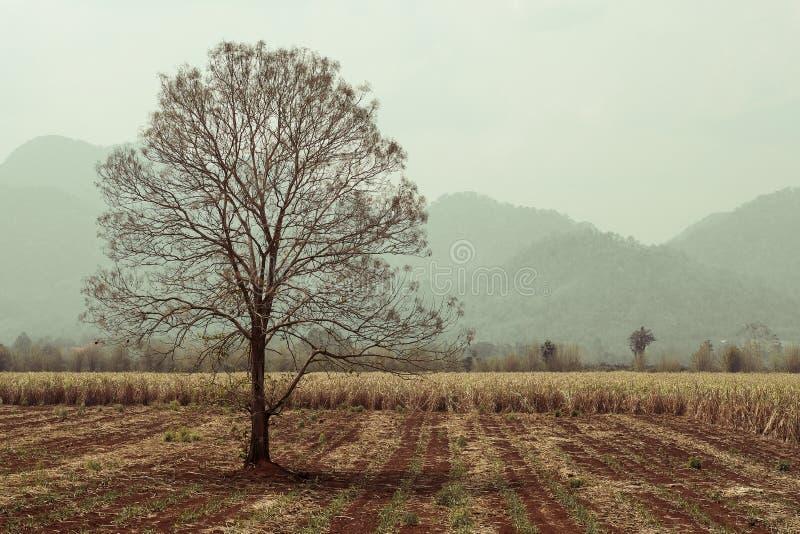 Árbol seco solo en campo imagen de archivo libre de regalías