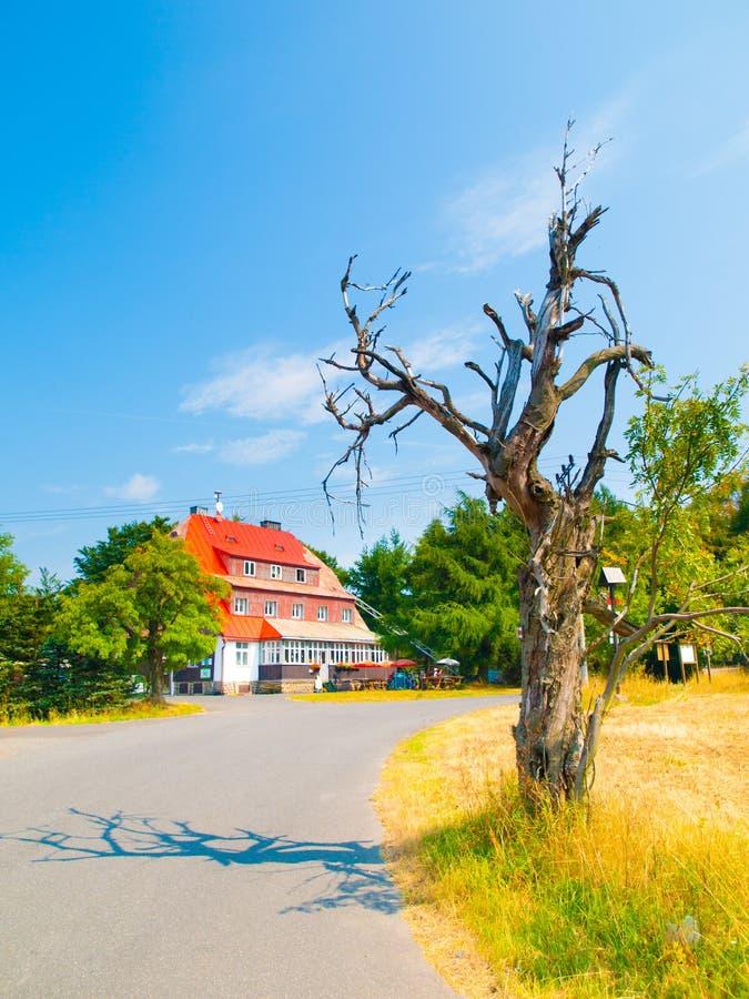 Árbol seco viejo en la choza Vitiska en montañas del mineral, República Checa de la montaña fotografía de archivo libre de regalías