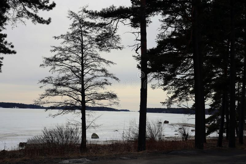 Árbol Silhouttes y puesta del sol durante invierno en Finlandia fotografía de archivo libre de regalías