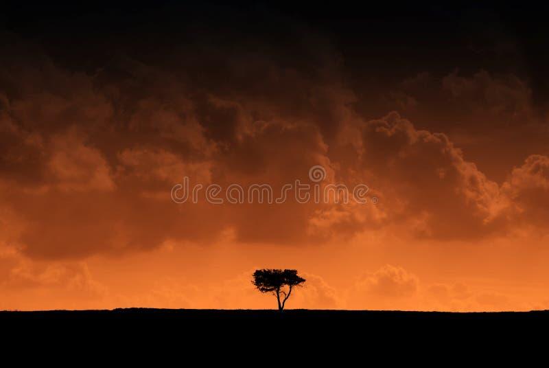 Árbol silueteado con efecto rojo foto de archivo libre de regalías
