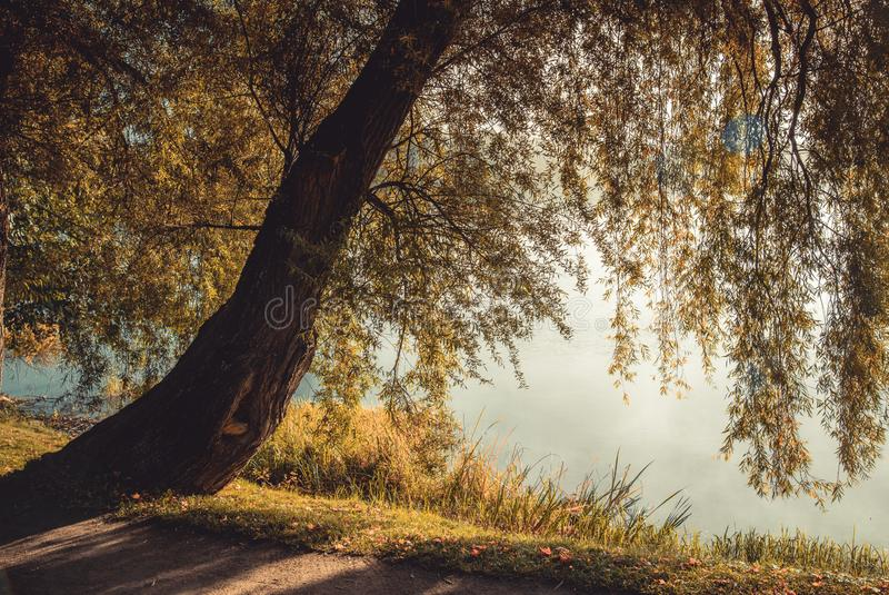 Árbol silvestre cerca del agua en otoño imagenes de archivo