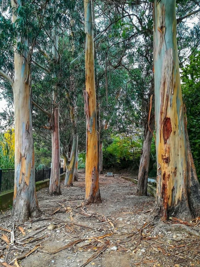 Árbol sin la corteza en parque foto de archivo