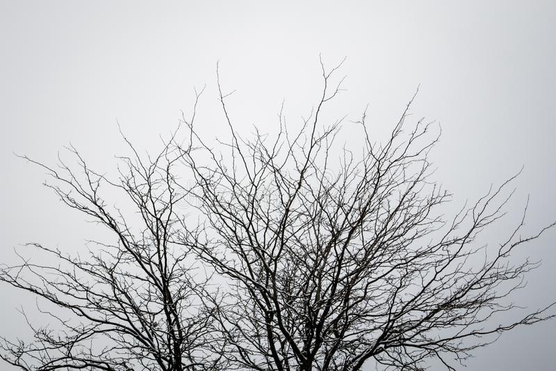 Árbol sin las hojas contra un cielo limpio fotos de archivo