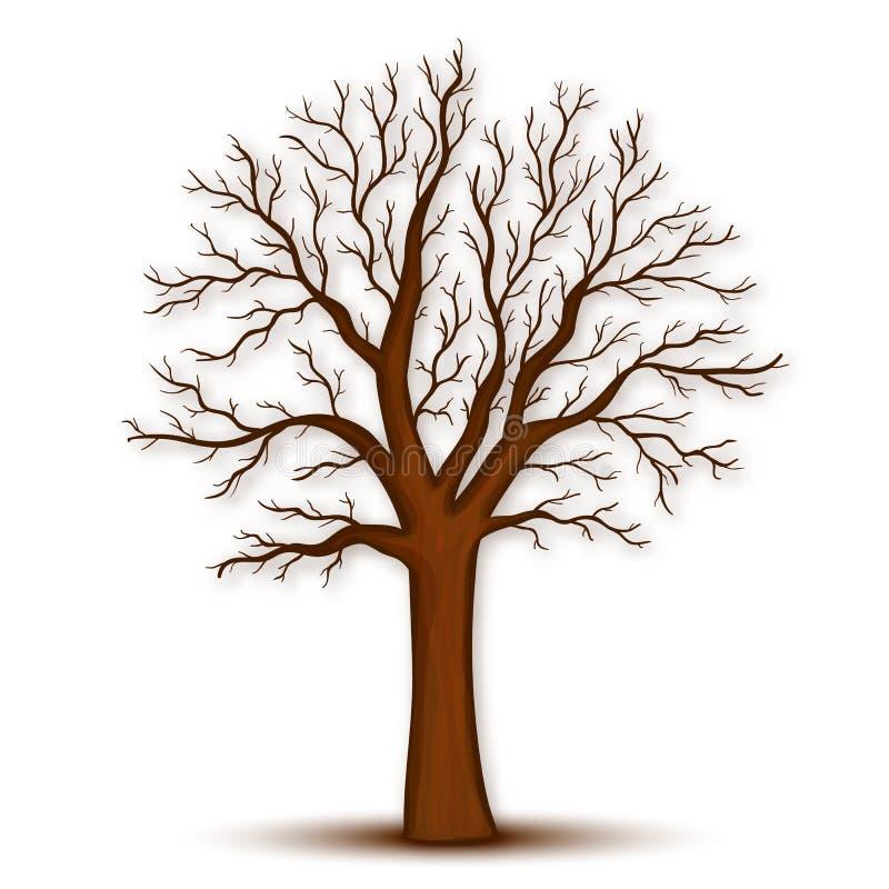 Árbol sin vector de las hojas imagen de archivo libre de regalías