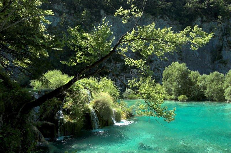 Árbol sobre la cascada del agua fotos de archivo libres de regalías
