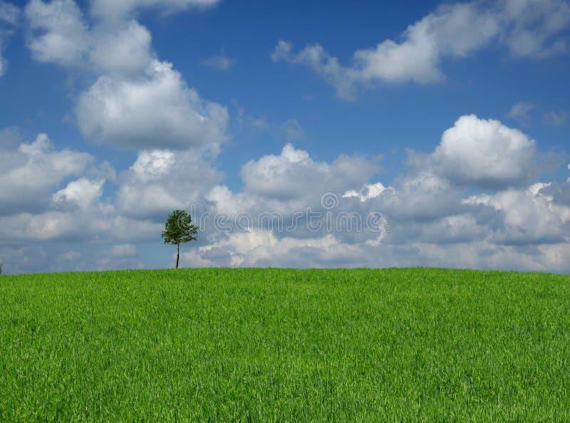 Download Árbol solitario foto de archivo. Imagen de nublado, hierba - 1295088