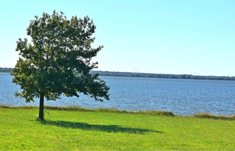 Árbol, solitario, al lado del lago Hefner, Oklahoma City imágenes de archivo libres de regalías