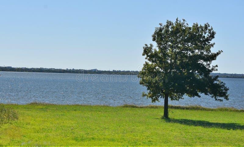 Árbol, solitario, al lado del lago Hefner, Oklahoma City foto de archivo libre de regalías