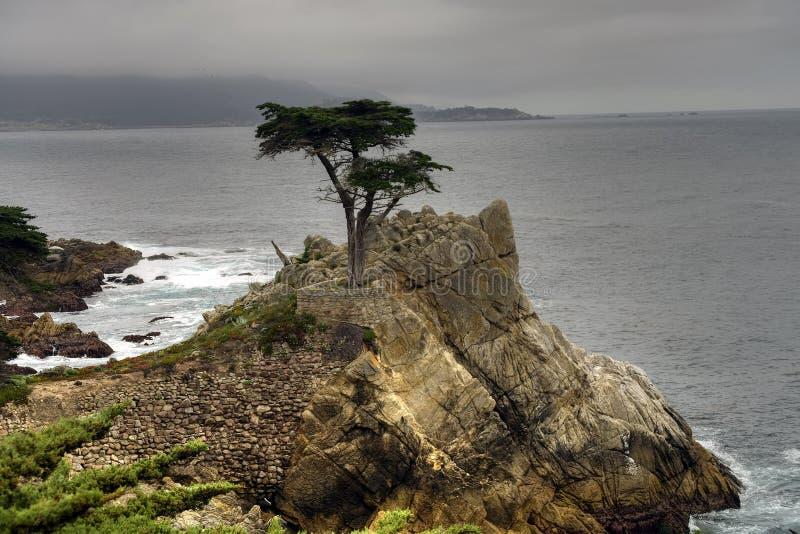 Árbol solitario Big Sur California fotografía de archivo