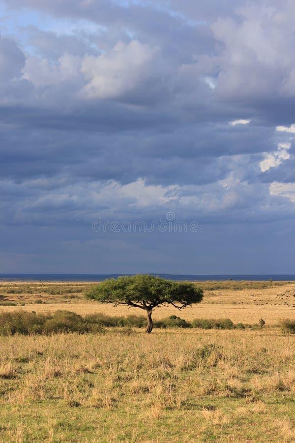 Árbol solitario, cielos nublados foto de archivo libre de regalías