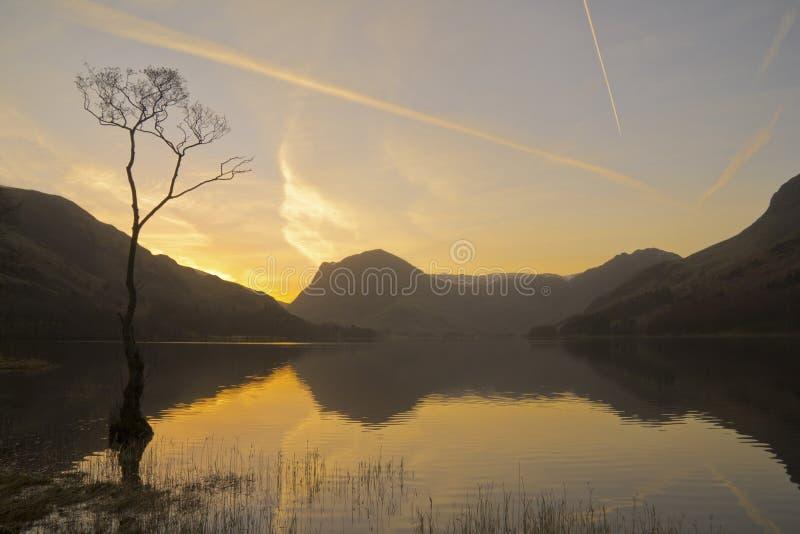 Árbol solitario de Buttermere en la salida del sol fotografía de archivo libre de regalías