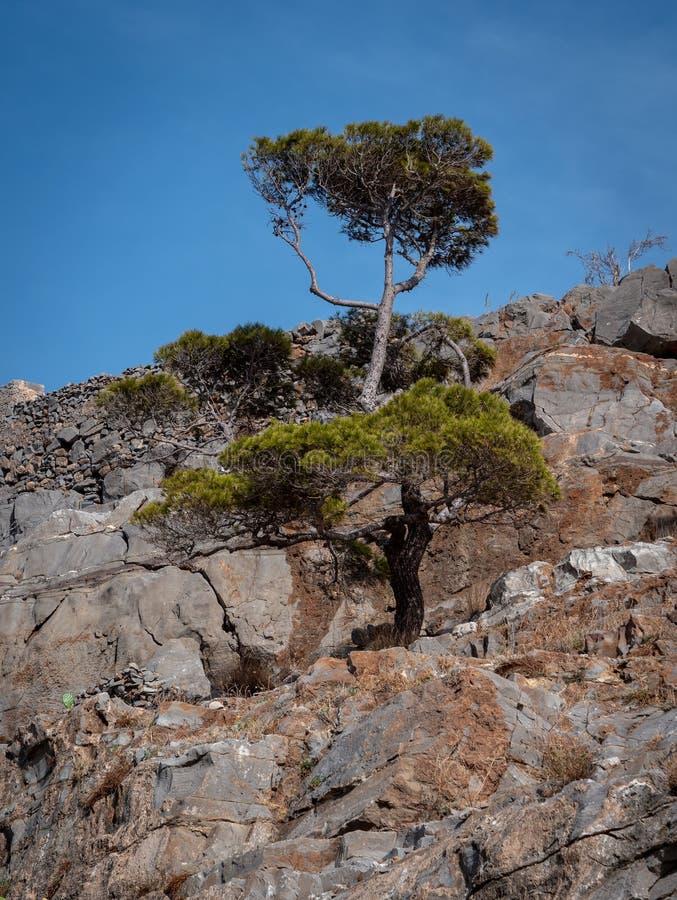 Árbol solitario de la montaña imágenes de archivo libres de regalías