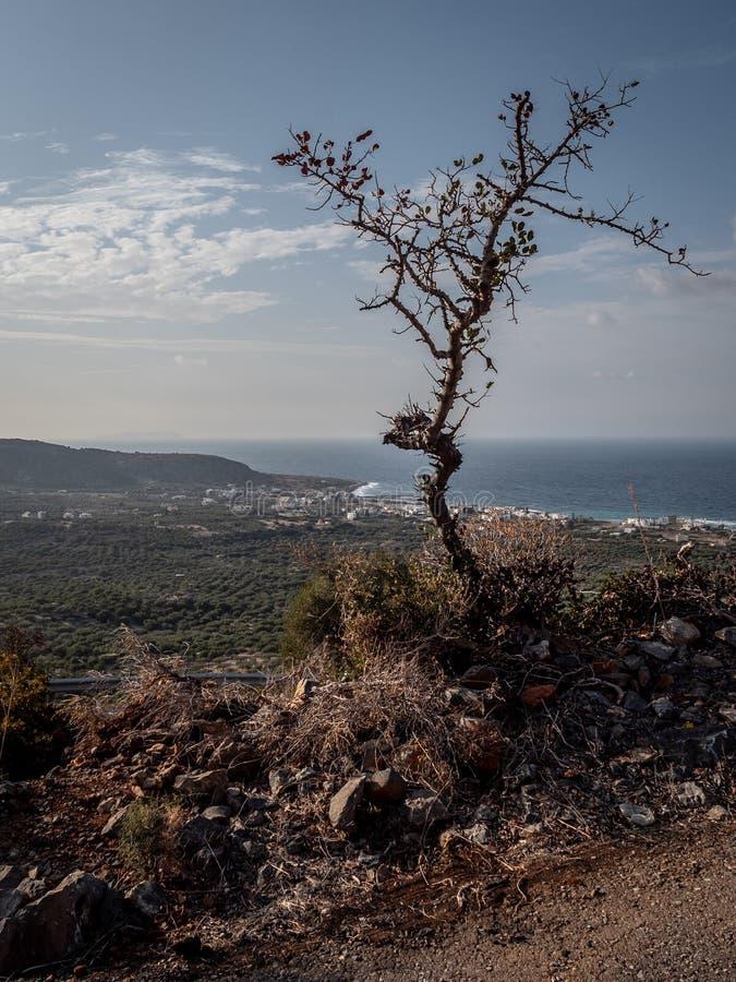 Árbol solitario de la montaña fotografía de archivo libre de regalías