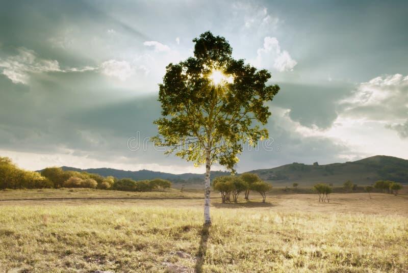 Árbol solitario de la montaña fotografía de archivo