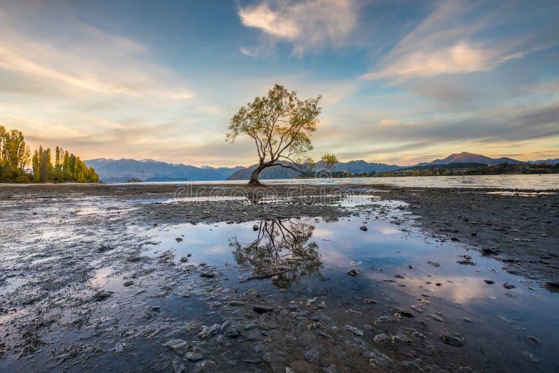 Árbol solitario del lago Wanaka, Nueva Zelanda imagen de archivo libre de regalías