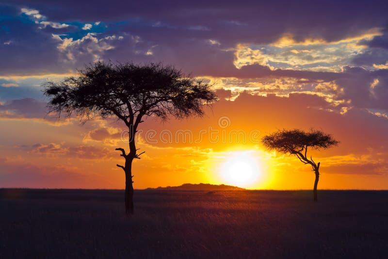 Árbol Solitario Dos En Un Fondo De La Puesta Del Sol Tropical Fotografía de archivo
