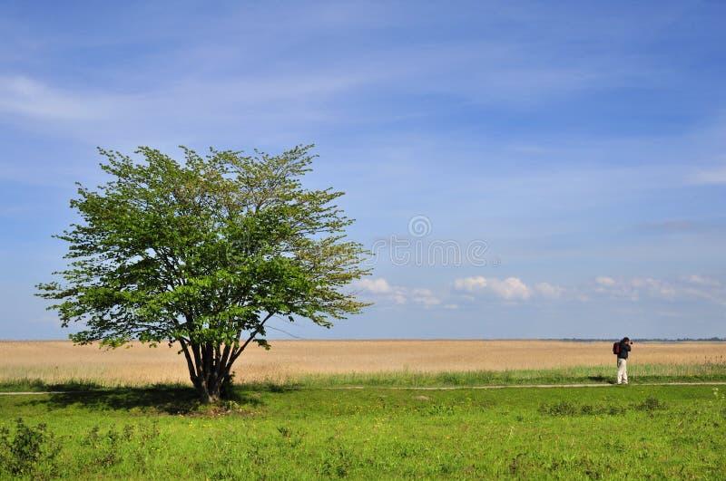 Árbol solitario en campo fotos de archivo