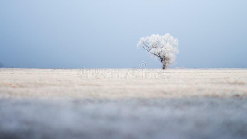 Árbol solitario en campo ancho en invierno en una mañana escarchada imagen de archivo