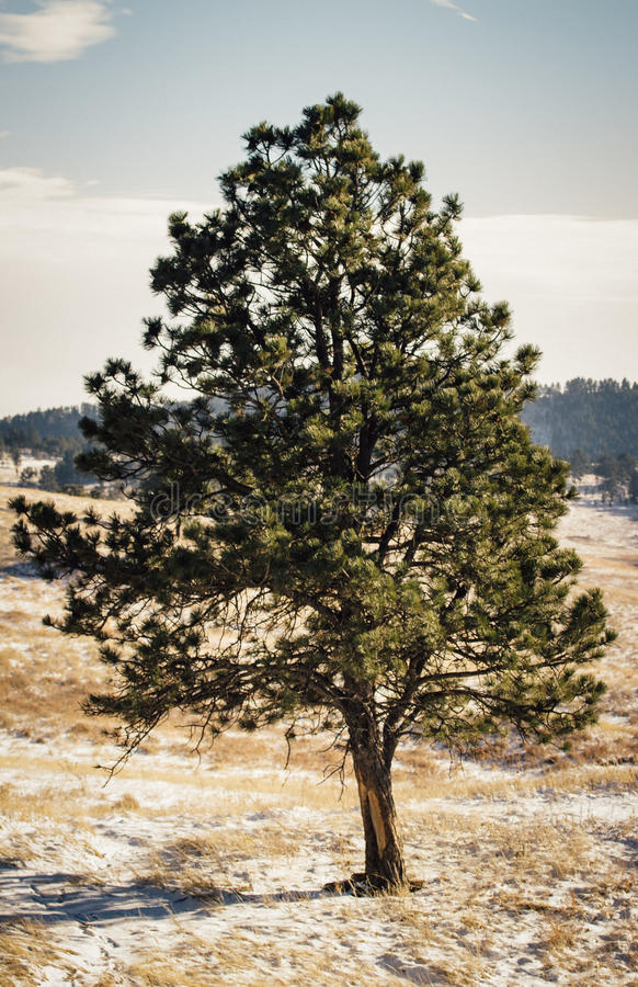 Árbol solitario en Dakota del Sur imagen de archivo libre de regalías