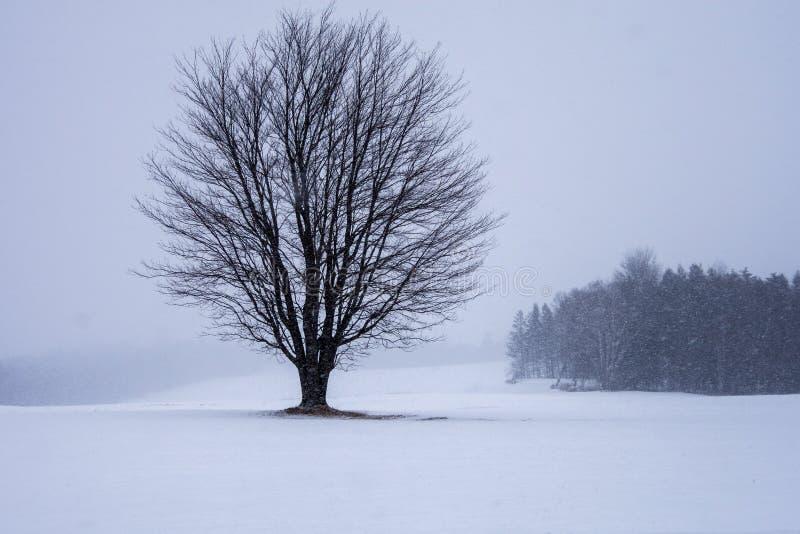 Árbol solitario en el campo foto de archivo libre de regalías